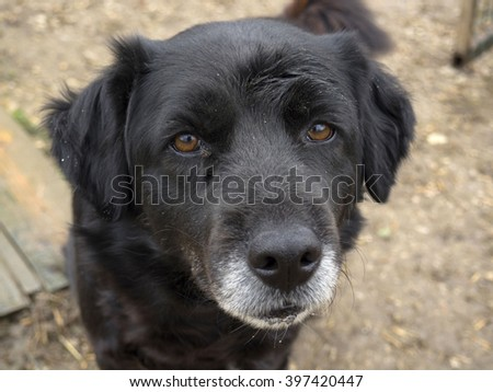 abandoned senior dog, sad old dog  - stock photo