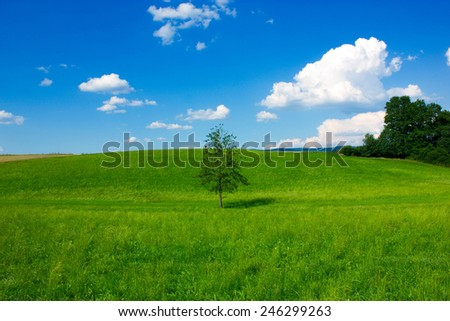 Abandoned tree in the sunny afternoon - stock photo