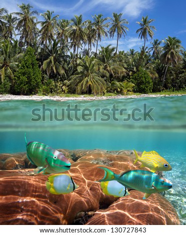 Above and below sea surface at the edge of a tropical beach with coconut palm trees and colorful fish with coral underwater - stock photo