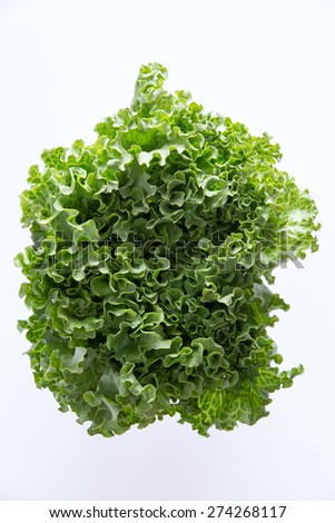 Above head shot of newly Harvested fresh crispy leafy green lettuce isolated on white perfect healthy salad ingredient and garnish - stock photo