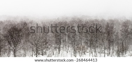 above view on snow storm in forest in spring - stock photo
