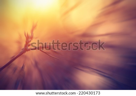 Abstarct fabulous picture in the form of tree branches at dawn and sunlight. - stock photo