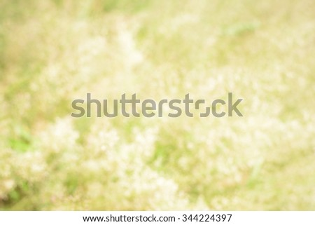Abstract and background blurry with grass flowers on vintage tone - stock photo