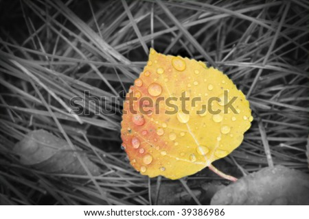 Abstract aspen leaf with water droplets - stock photo