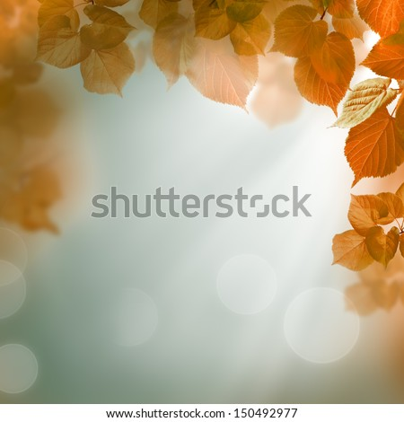Abstract autumn background with leaves and evening light - stock photo