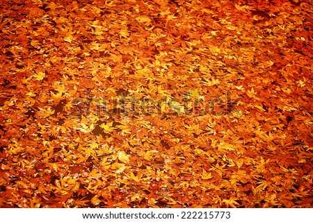 Abstract autumn leaves background, dry orange maple leaf floating in forest river, beauty of a nature at fall season - stock photo