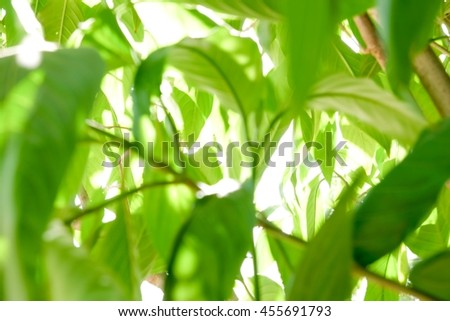 Abstract background and blur with green natural leaf in forest - stock photo