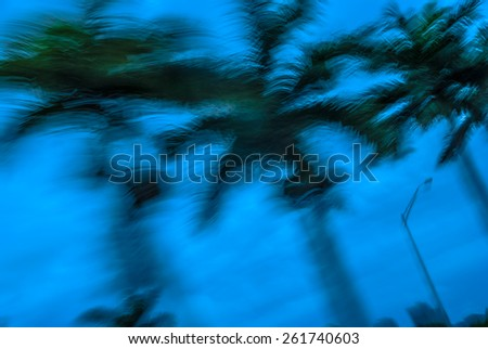 Abstract background blur palm leaves in motion during tropical hurricane   Stormy weather motion blur palm trees against blue sky during Florida hurricane for blog magazine poster book cover - stock photo