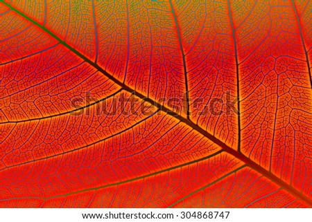 Abstract background, Close up of green leaf texture, Colorful of leaf texture. - stock photo