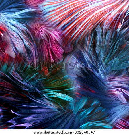 abstract background colorful fighting beta fish - stock photo
