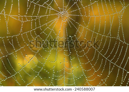 abstract background from a web shine in the sun - stock photo
