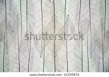 Abstract background from skeletons of autumn leaves - stock photo