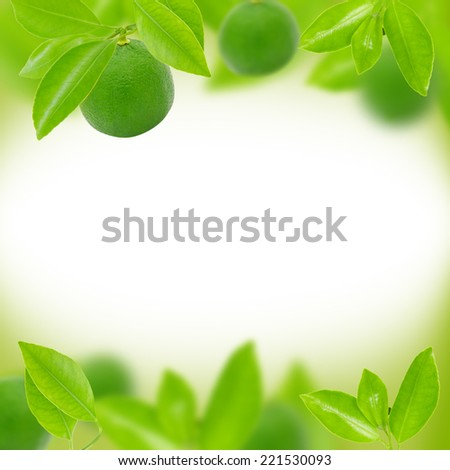 Abstract background made of limes and leaves - stock photo