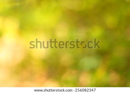 Abstract background nature,Blur Out of focus on tree leaves - stock photo