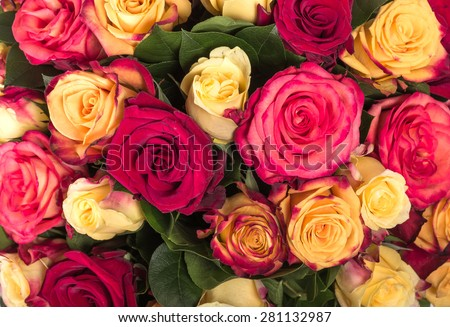 Abstract background of flowers. Close up - stock photo