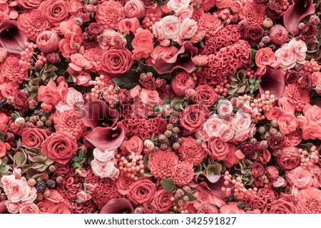 Abstract background of flowers Close-up. - stock photo