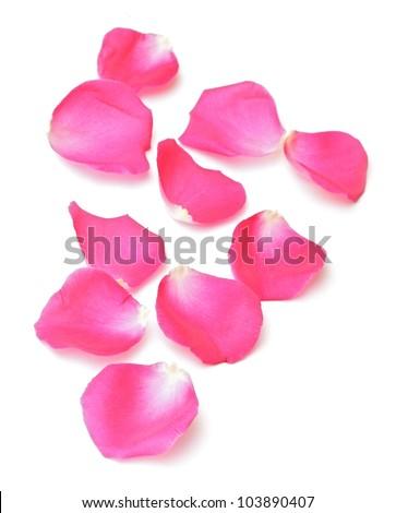 pink rose petals - stock Falling Light Pink Rose Petals