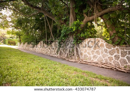 Abstract background of tree and big roots grove on the brick stonewall. Miami, USA, Florida, Key Biscayne. USA  - stock photo