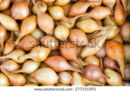 Abstract background: onions - stock photo