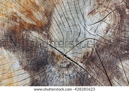 Abstract Background Texture Of Freshly Chainsaw Cut Wood - stock photo