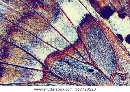 abstract background - wing of butterfly close-up, instagram effect photo - stock photo