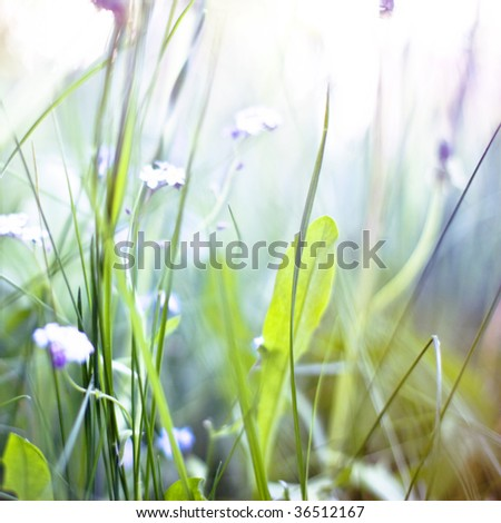 abstract background with closeup grass and small blue flowers made with soft-filters - stock photo