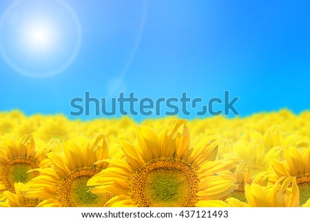 Abstract background with sunflowers isolated on blue - stock photo