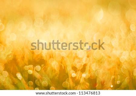 abstract background yellow bokeh circles - stock photo