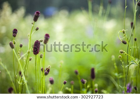 Abstract beautiful gentle spring flower background.  Closeup with soft focus. Shallow focus - stock photo