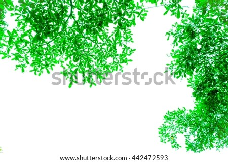 abstract beauty leaves and flower background pattern - stock photo