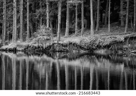 abstract black and white reflection landscape with many trees and lake  - stock photo