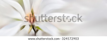 Abstract blurred flowers. Intentional motion blur. Magnolia kobus. Blooming tree with white flowers - stock photo