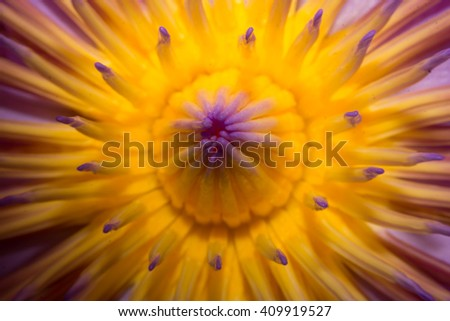 abstract close up lotus flower. - stock photo