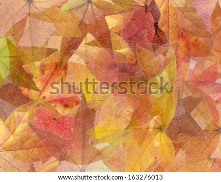 Abstract Colorful Autumn Maple Leaf Background - stock photo