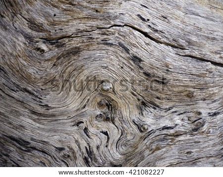 Abstract curly wood texture - stock photo