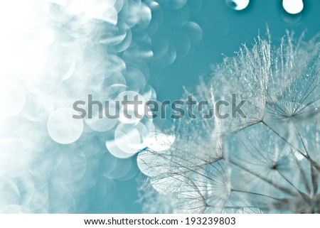 abstract dandelion flower background, extreme closeup with soft focus and light effect, beautiful nature details. Art photography with light bookeh - stock photo