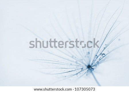abstract dandelion flower background with water drops. extreme c - stock photo