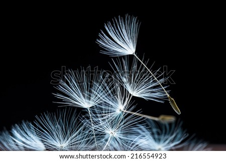 Abstract dandelion seeds - stock photo