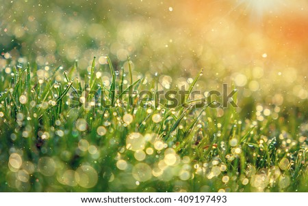 abstract dreamy and blurred image of grass with sun flare. drops of dew, small depth of field. used as background. color in nature. fabulous beauty of nature. instagram toning effect - stock photo
