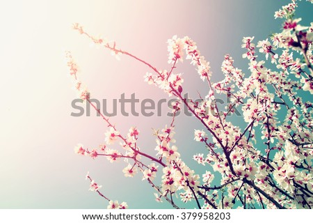 abstract dreamy and blurred image of spring white cherry blossoms tree. selective focus. vintage filtered with glitter overlay - stock photo
