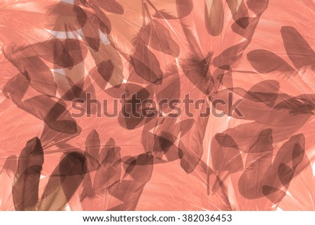 Abstract feathers on the white background.Used many layer and filter for tone color. - stock photo