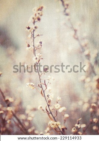 Abstract floral background, grunge style photo of beautiful flowers, fine art, faded natural wallpaper, fashioned image - stock photo