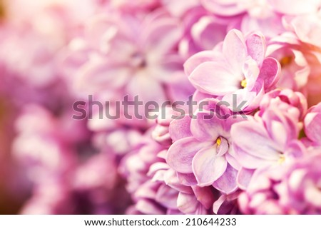 abstract floral background with tender lilac flowers - stock photo