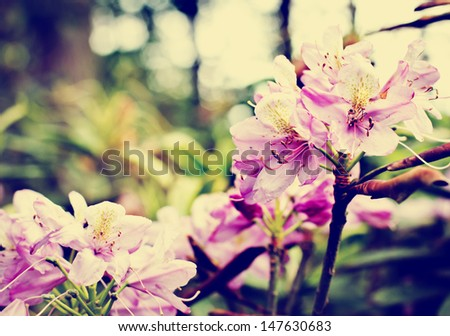 Abstract Flower Design/ Vintage exotic flowers background - stock photo