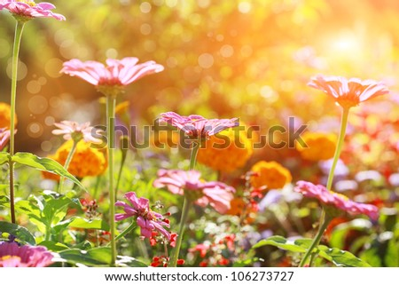 Abstract flowerbed in sunny day, shallow DOF - stock photo