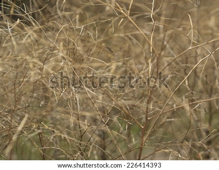 Abstract golden plant background with wiry tangled look - stock photo