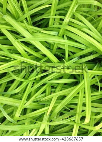 Abstract green grass leaves texture background - stock photo