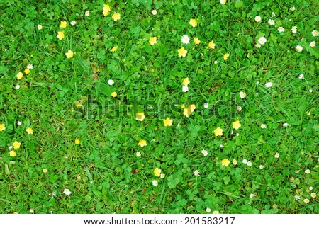 Abstract green grass texture with white and yellow flowers - stock photo