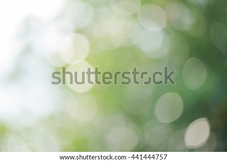 Abstract green nature defocus, Green nature blured background, Nature blurry leaves with daylight for background - stock photo