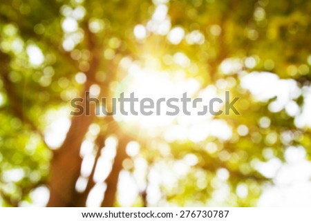 Abstract image of bokeh leaf with sunlight. Nature background - stock photo